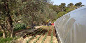 ferme jardins alcépiades