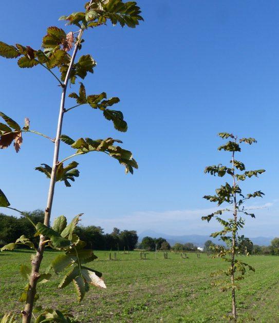 agroforesterie système laitier bio