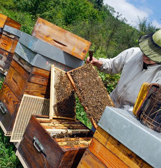 apiculteur 66