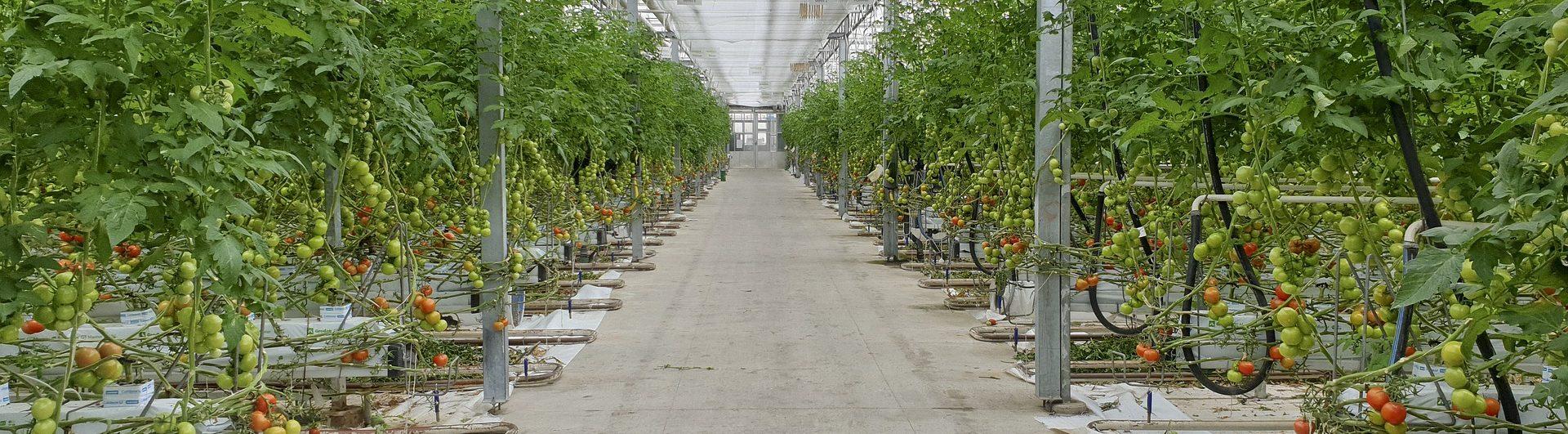 Que Planter En Octobre Sous Serre serres chauffées : les évolutions règlementaires - produire bio